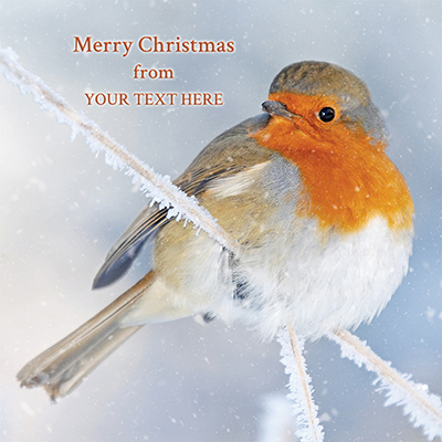 Festive Robin Front Personalised Personalised Charity Christmas Card