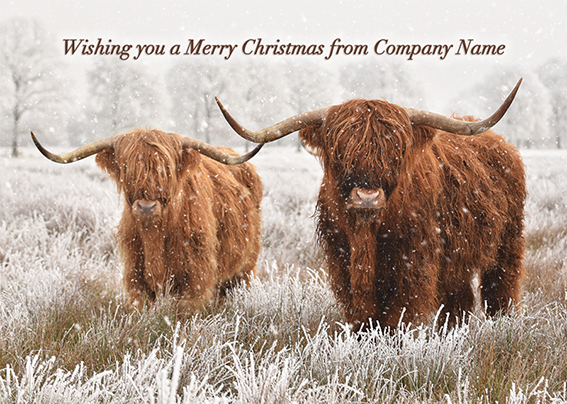 Highland Cow Duo Front Personalised Personalised Charity Christmas Card