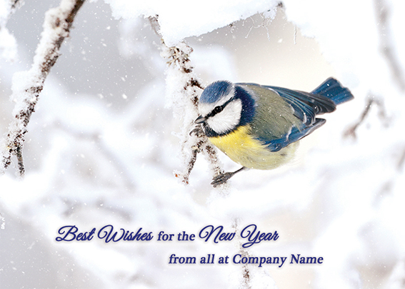 Icy Blue Tit Front Personalised Personalised Charity Christmas Card