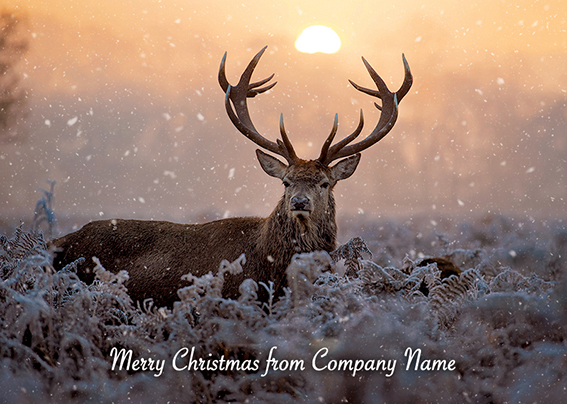 Majestic Stag Front Personalised Personalised Charity Christmas Card