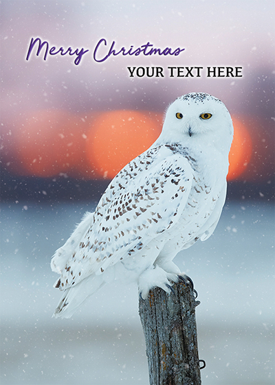 Snowy Owl Front Personalised Personalised Charity Christmas Card