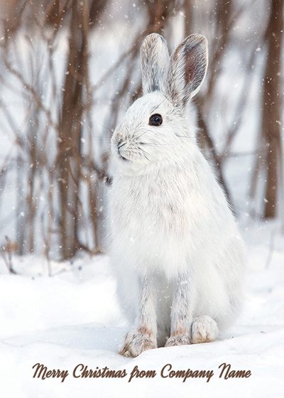 White Snowshoe Hare Front Personalised Personalised Charity Christmas Card
