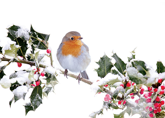 Festive Robin and Holly Personalised Charity Christmas Card