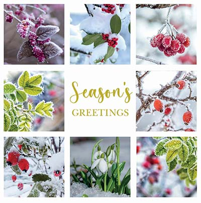 Winter Berries Collage Personalised Charity Christmas Card