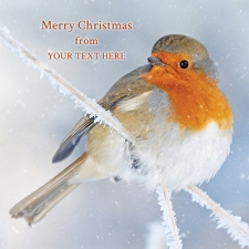 Festive Robin Front Personalised Card