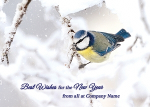 Icy Blue Tit Front Personalised Card