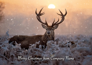 Majestic Stag Front Personalised Card