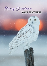 Snowy Owl Front Personalised Card